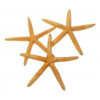 4019O - Orange Pointer Starfish